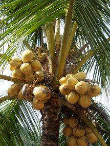 kokosblütenzucker-2