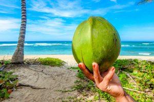 kokoswasser-inhaltsstoffe-2