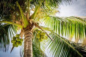 kokoswasser-inhaltsstoffe
